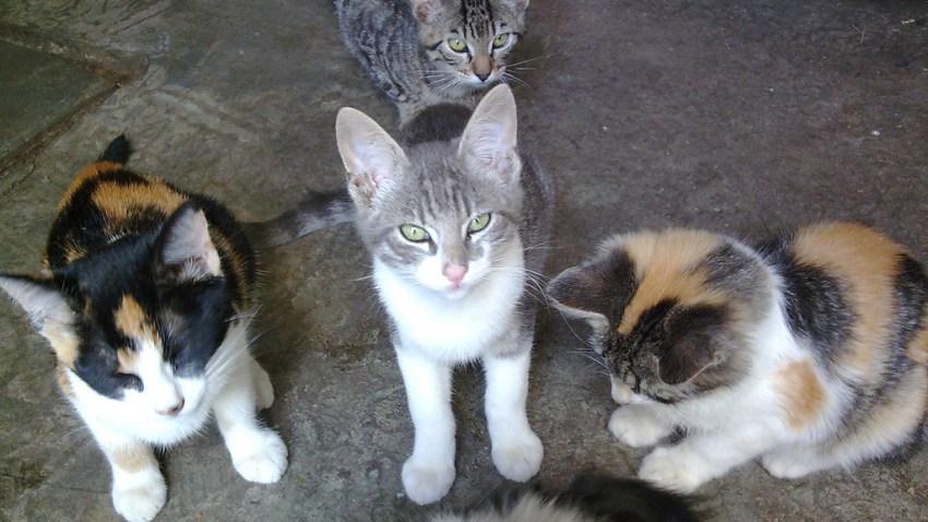gatos rescatados generica
