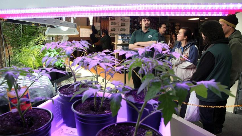 Marihuana-WashingtonDC