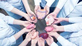 Personas sujetando modelos de diferentes organos que se pueden donar