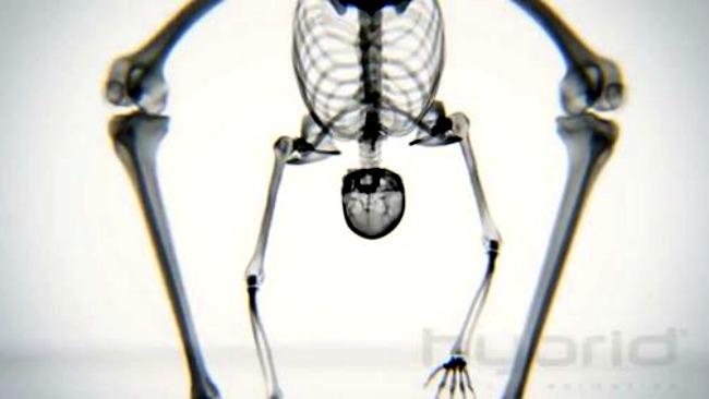 tlmd_yoga_esqueleto_video_x_ray