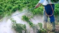 México: hallan pesticidas en niños de Jalisco