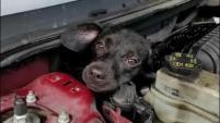 """Bomberos iniciaron una ardua labor de rescate por """"Pippi"""", que le costó a la dueña del vehículo cientos de dólares."""