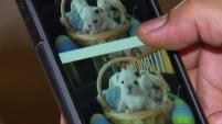 Para adoptar mascotas es mejor acudir a los albergues especializados pues no siempre se puede confiar en lo que se publica en las redes sociales.