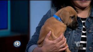 Bruce y otros cachorros como él buscan ser adoptados