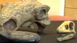 Semana del dinosaurios en el museo