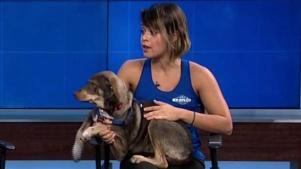 Evento de adopción de mascotas