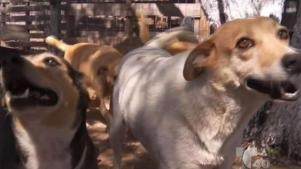 Recomendaciones para cuidar a las mascotas del calor