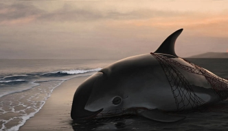 Expertos: sólo quedan 22 vaquitas marinas en México