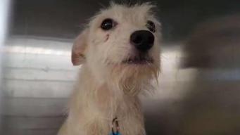 Reunifican y ponen en adopción a mascotas rescatadas