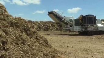 Programa en McAllen brinda la oportunidad de reciclar árboles