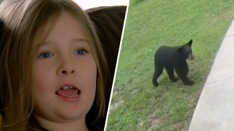 Grito de película: niña muy valiente le da tremendo susto a un oso