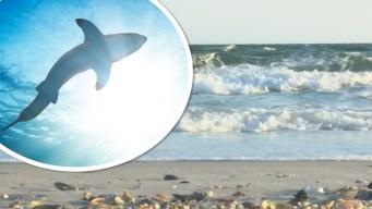 Tiburón ataca a niño de 8 años que nadaba en una playa