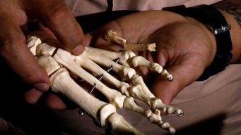 Descubren huesos de una especie similar a los humanos