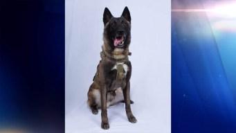 El perro que ayudó a capturar y matar al líder de ISIS
