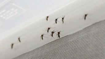Descubren molécula como fármaco contra el zika