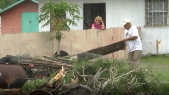 Tormenta derriba árboles y causa daños a casas
