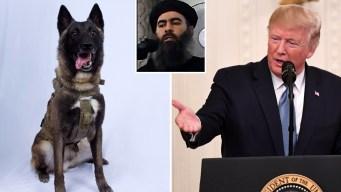 """Trump recibirá a """"Conan"""", el perro que acabó con Baghdadi"""