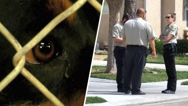 [TLMD - LV] Horrendo: mascotas enloquecidas matan a un bebé
