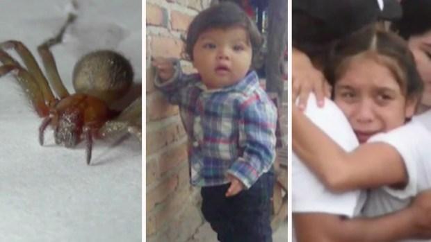 La peor pesadilla de una madre: bebé mexicano muere por picadura de araña