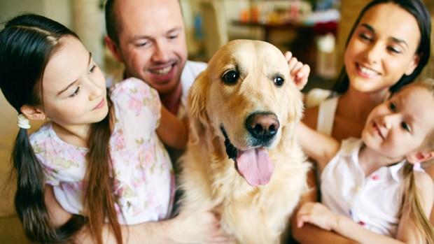FOTOS: los estados donde los perros son más felices