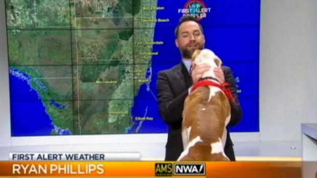 Video: Perro sorprende meteorólogo en vivo