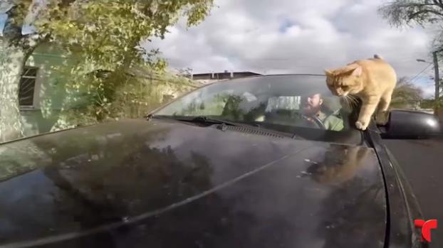 [TLMD - NATL] El taxista viral gracias a su intrépido gato