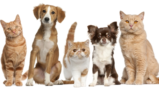 Ofrecen vacunas para mascotas a bajo costo en Mission