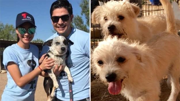 50 animalitos disponibles en Yaqui Animal Rescue, encuentra tu nueva mascota hoy.