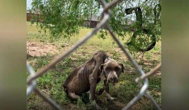 Investigan caso de crueldad animal en Weslaco