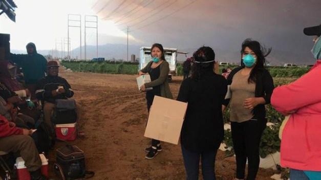 Bajo cenizas, trabajadores del campo siguen su labor