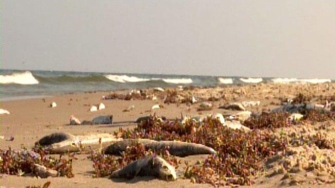 Comercio y turistas afectados por la marea roja