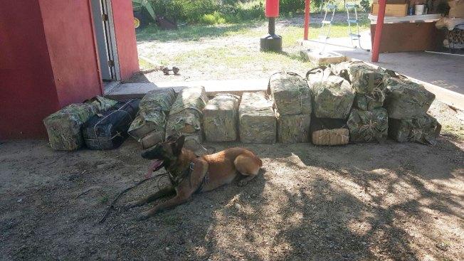 Confiscan más de1,200 libras de marihuana
