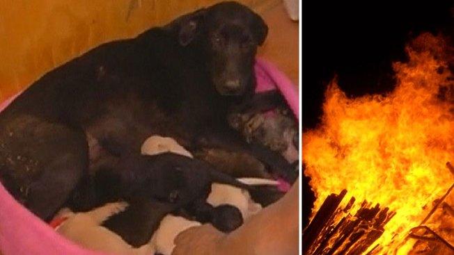 Mamá perro salva sus bebés de muerte segura