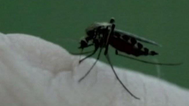 Bajo alerta por aumento de mosquitos