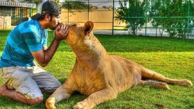 Un apasionado de los leones y tigres
