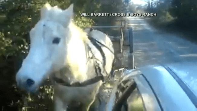 Escape de caballo se vuelve viral