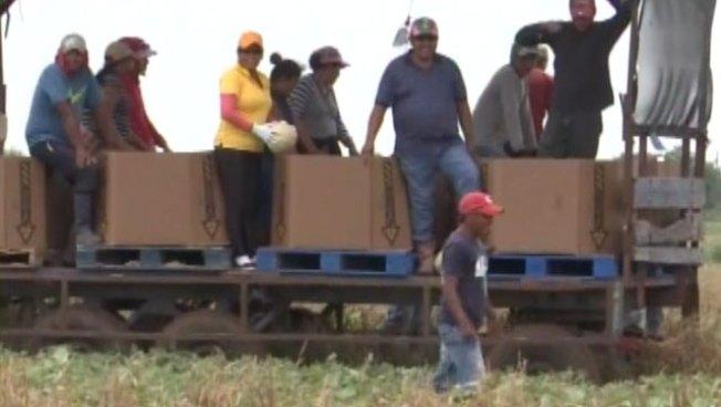 Lluvias afectan a los agricultores del Valle de Texas