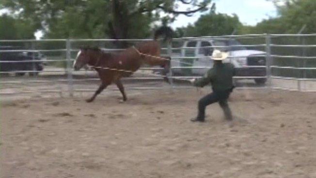 Más agentes para patrullar la frontera a caballo