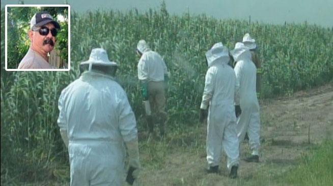 Sin consuelo por muerte tras ataque de abejas