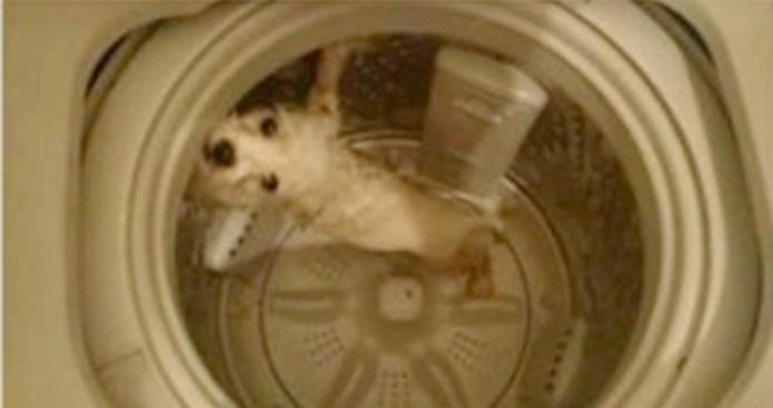 Dice que mató a su perro en la lavadora